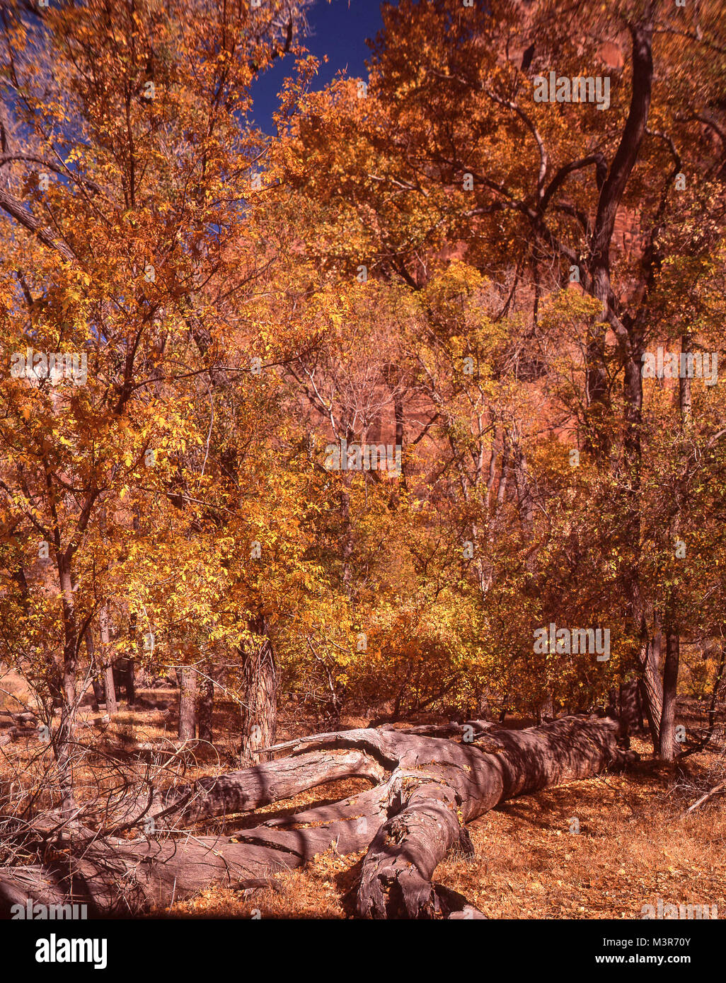 Zion National Park, Utah, USA Photo Stock