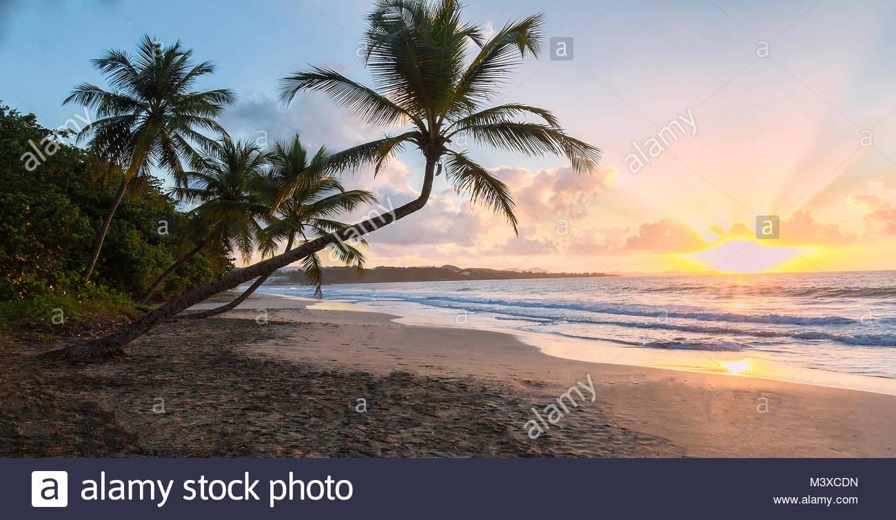 Coucher du soleil, Paradise beach et palm tree, la Martinique. Photo Stock