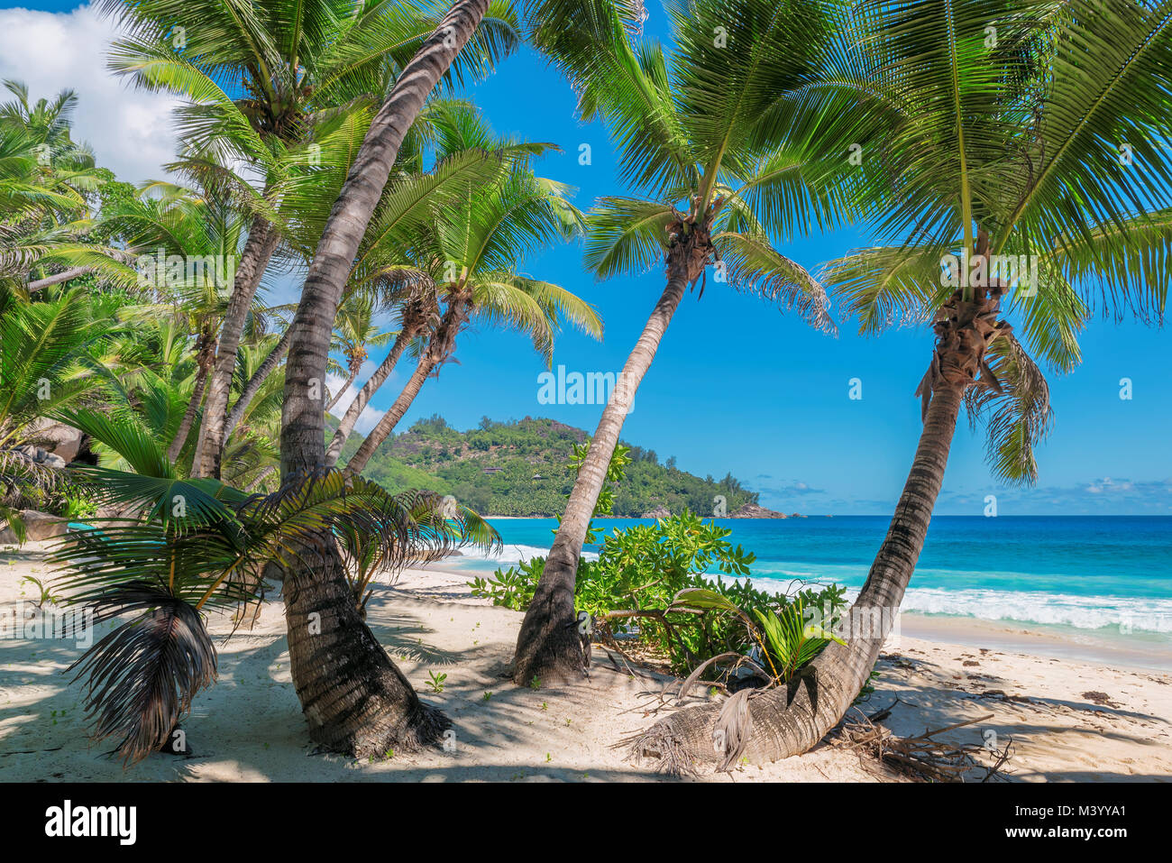 Des cocotiers sur la plage de sable Photo Stock