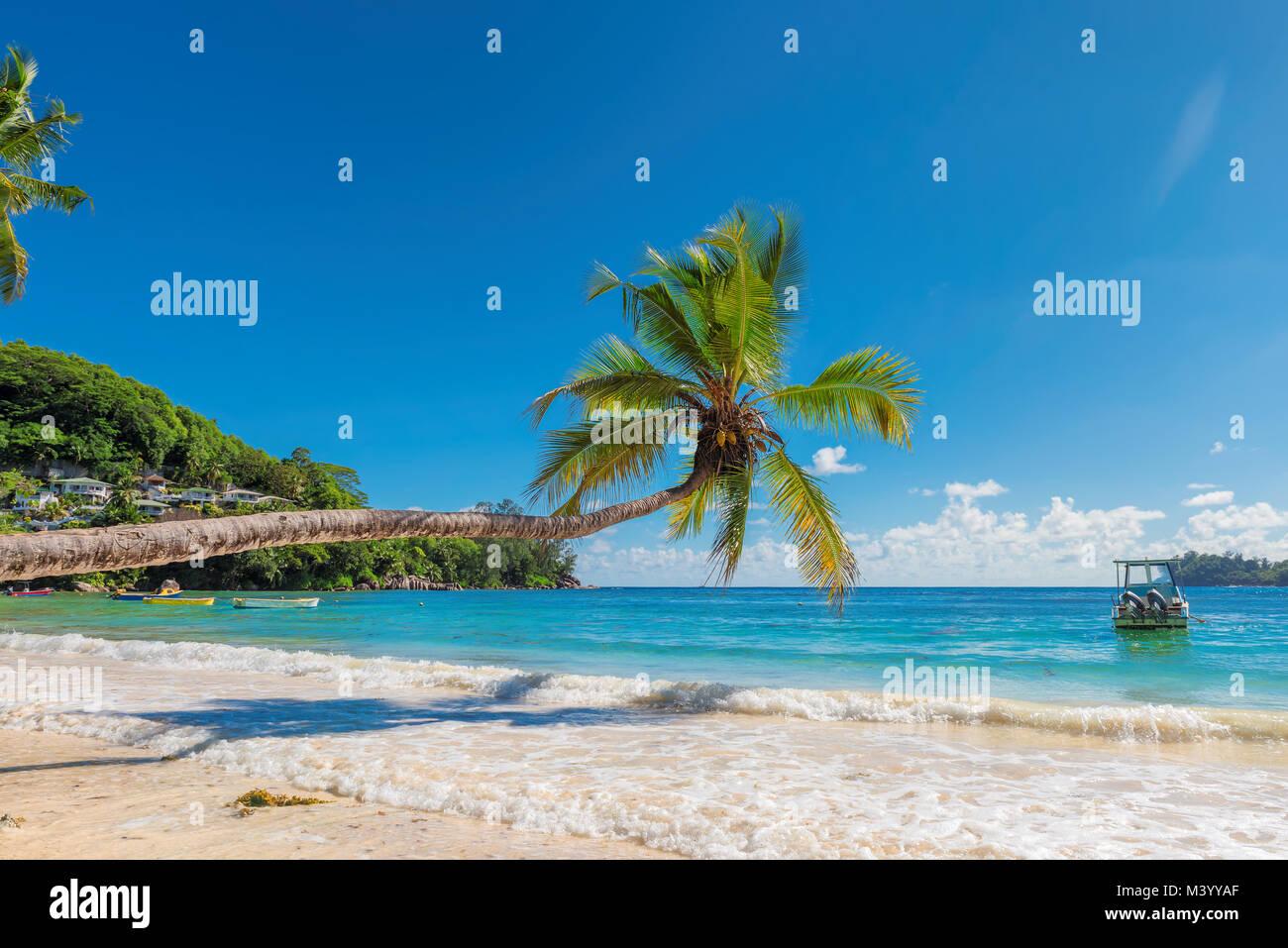 Arbre généalogique de cocotiers sur la plage de sable Photo Stock