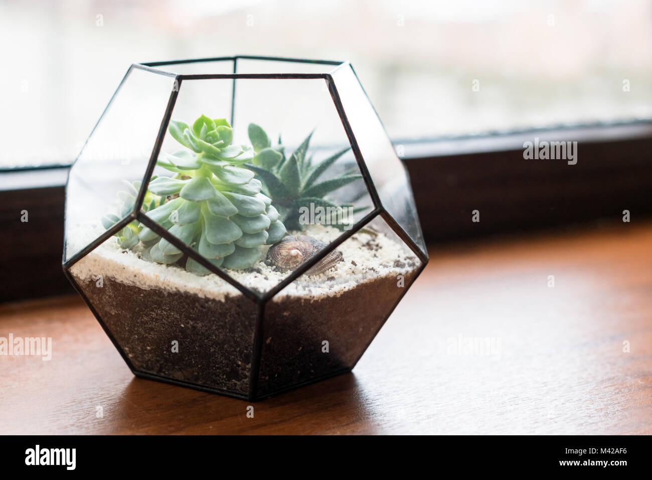 Mini Jardin Succulentes Dans Verre Terrarium En Bois Sur La Fenetre