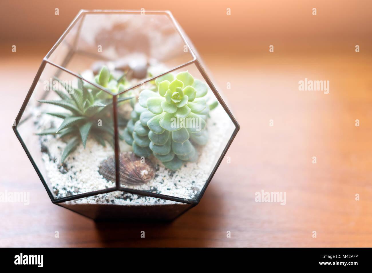 Decoration Avec Plantes Grasses mini jardin succulentes dans verre terrarium en bois sur la