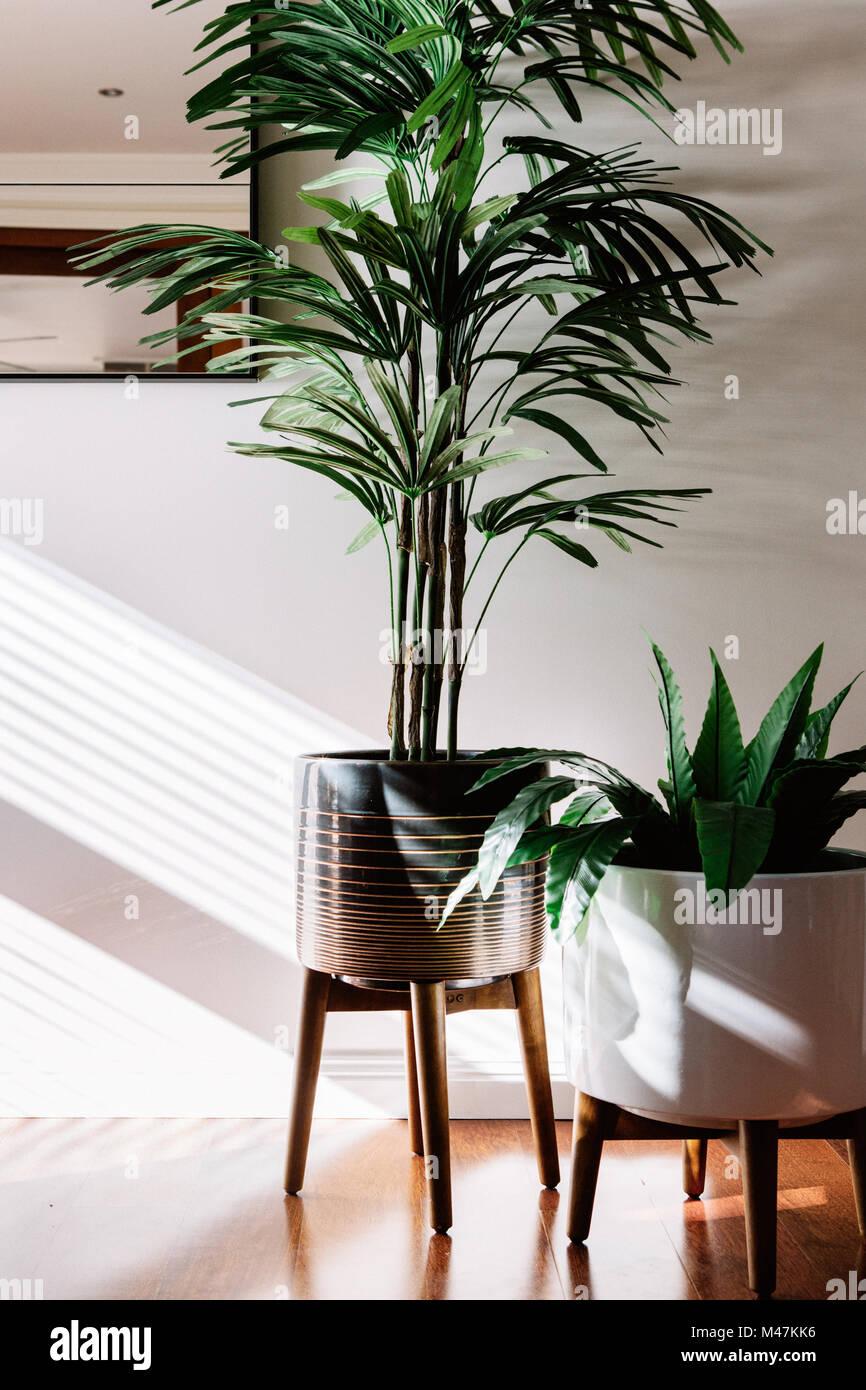 Paire de plantes d'intérieur dans des pots de céramique sur les stands en bois Banque D'Images