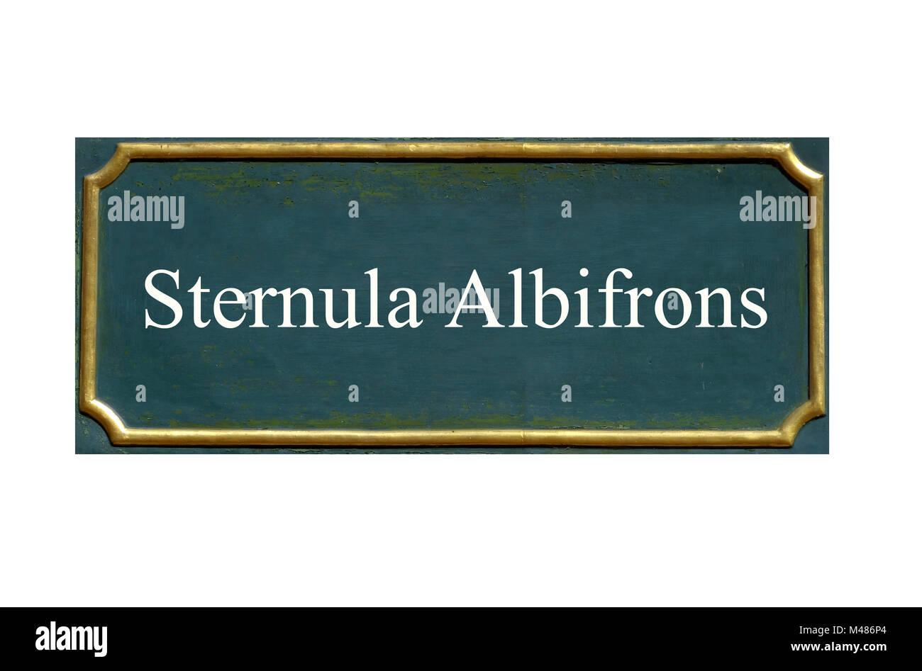 Peu de protection, Sterne Sterna albifrons, espèce animale menacée Banque D'Images