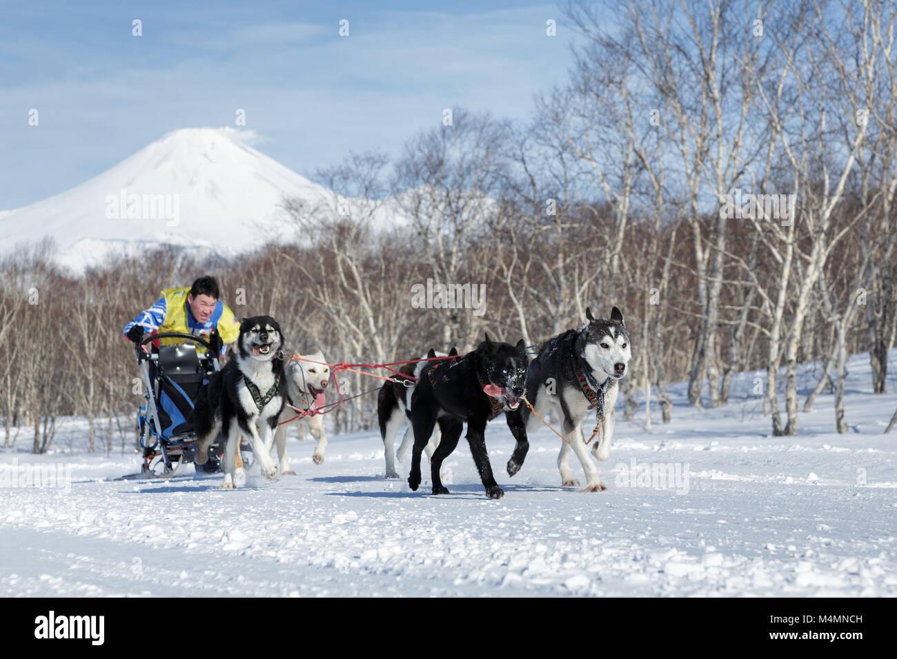 La péninsule du Kamtchatka: l'exécution de l'équipe de chiens de traîneau sur la concurrence le Kamchatka Sled Banque D'Images