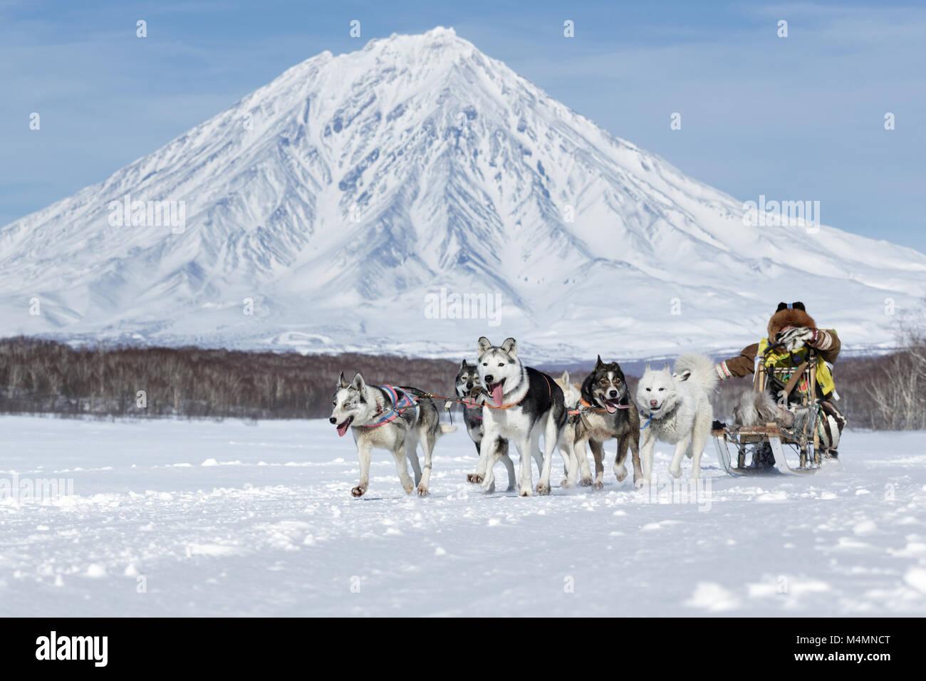 L'équipe de chien de traîneau de course de fond du Kamtchatka musher sur de majestueuses montagnes. Fédération de Banque D'Images