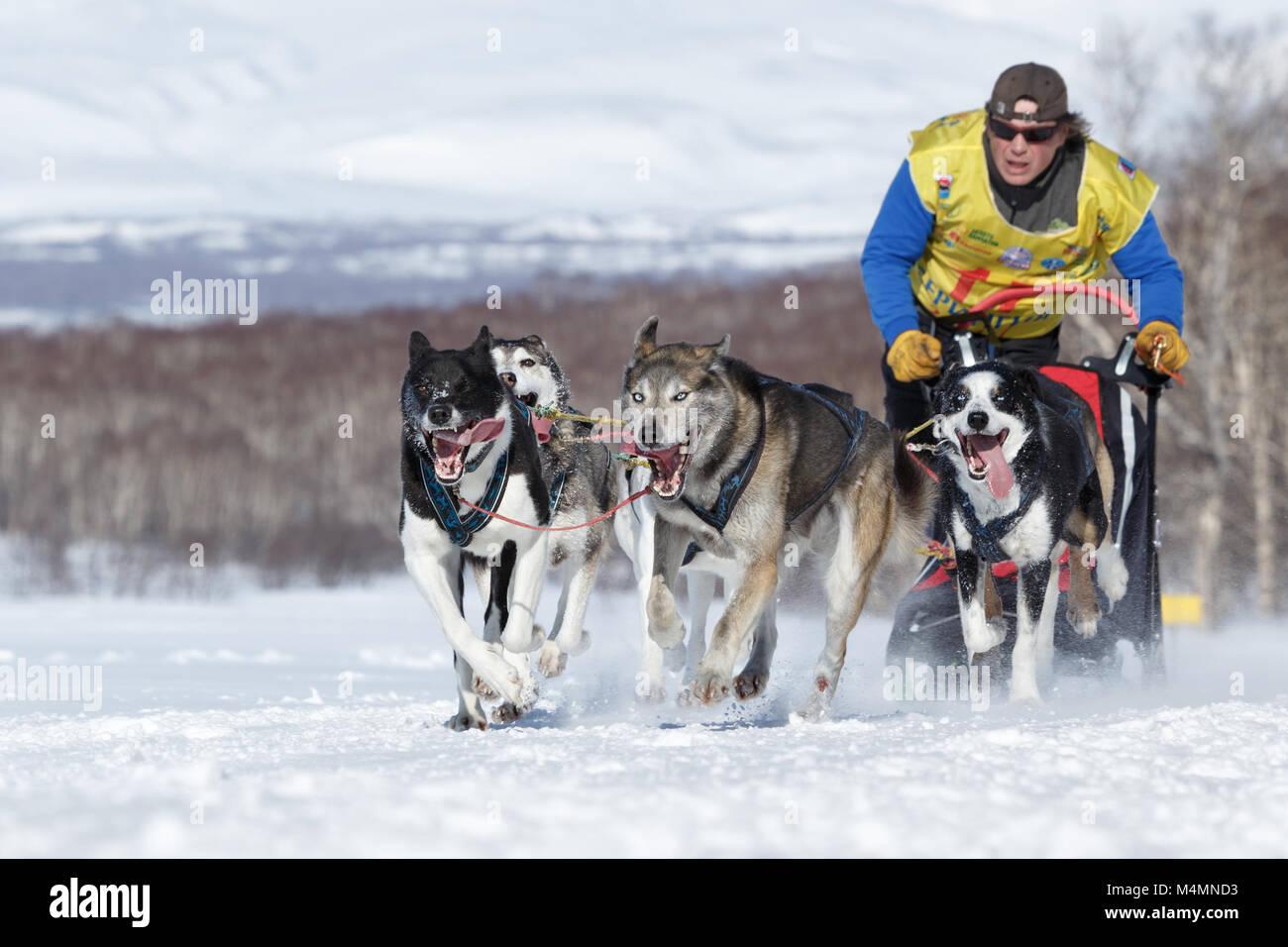 L'exécution de l'équipe de chiens de traîneau musher du Kamtchatka sur Course de chiens de traîneau la Béringie, Banque D'Images