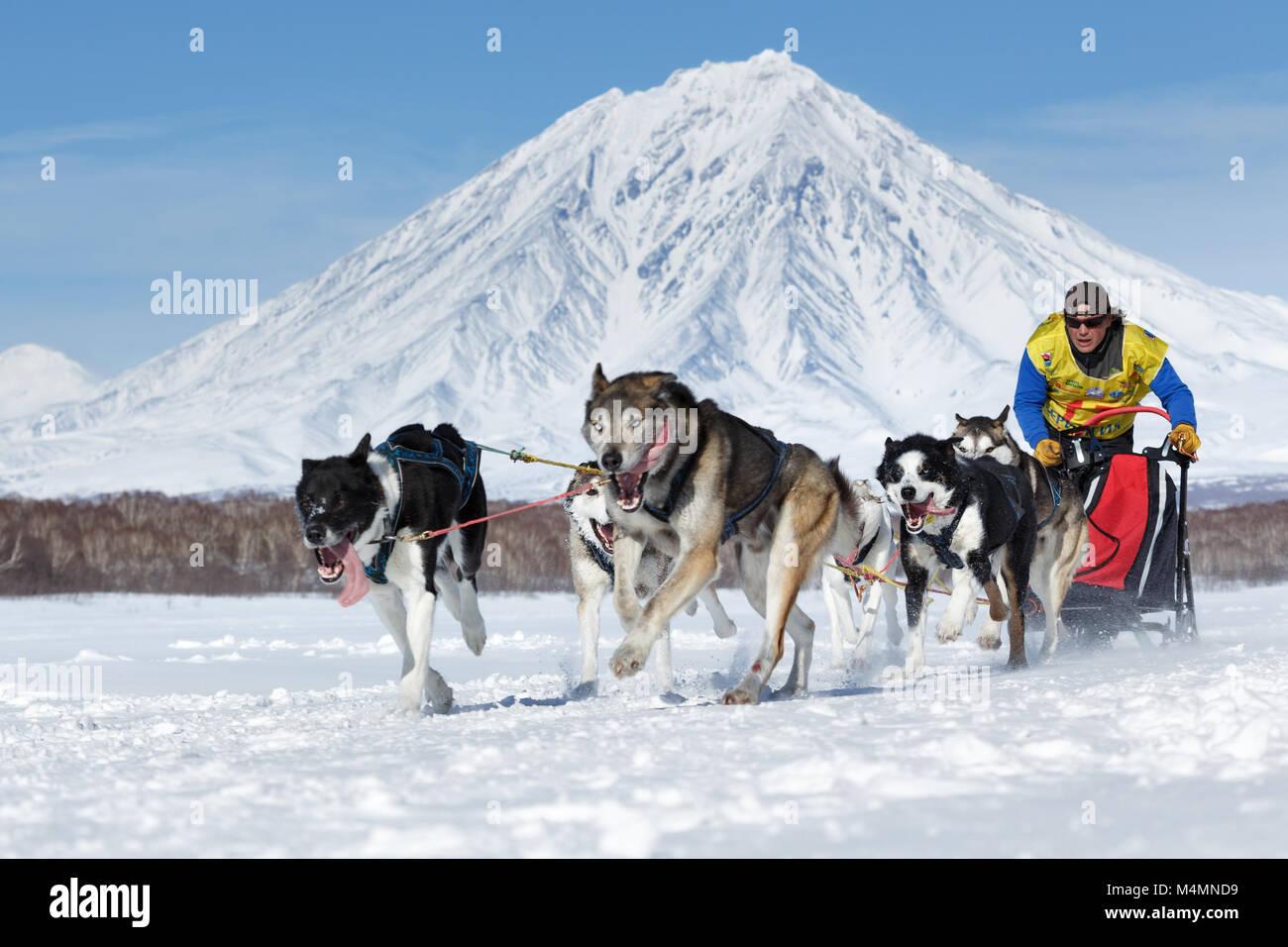 L'exécution de l'équipe de chiens de traîneau musher Kamchatka Semashkin Andrey sur fond de Volcan Koryak. Course Banque D'Images