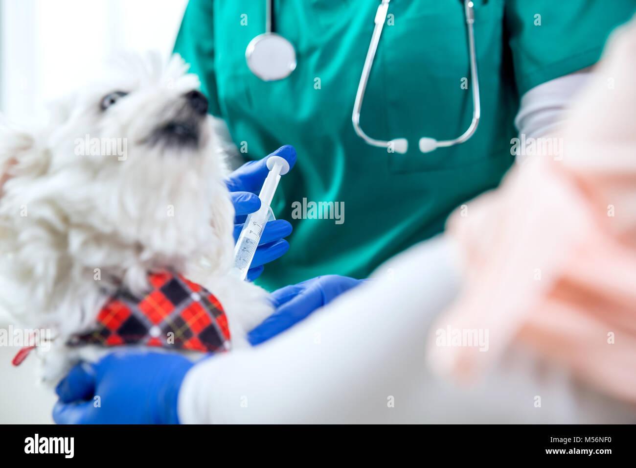 Méconnaissable vet fait une injection pour un chien Photo Stock