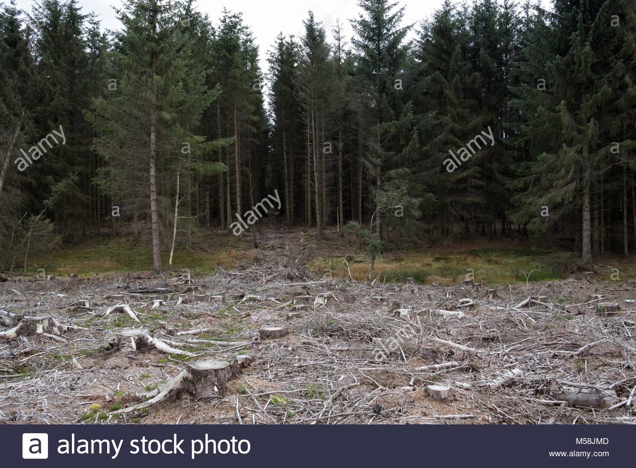 La déforestation dans le Northumberland Photo Stock
