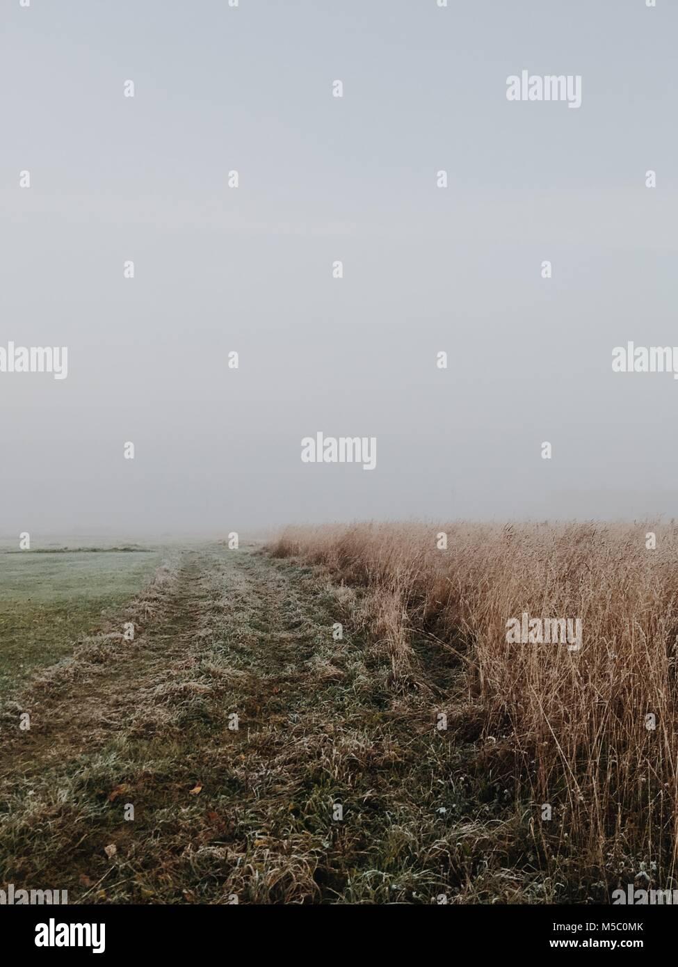 Champ de blé blanc rien derrière. Scène d'automne dure avec le brouillard. Photo Stock