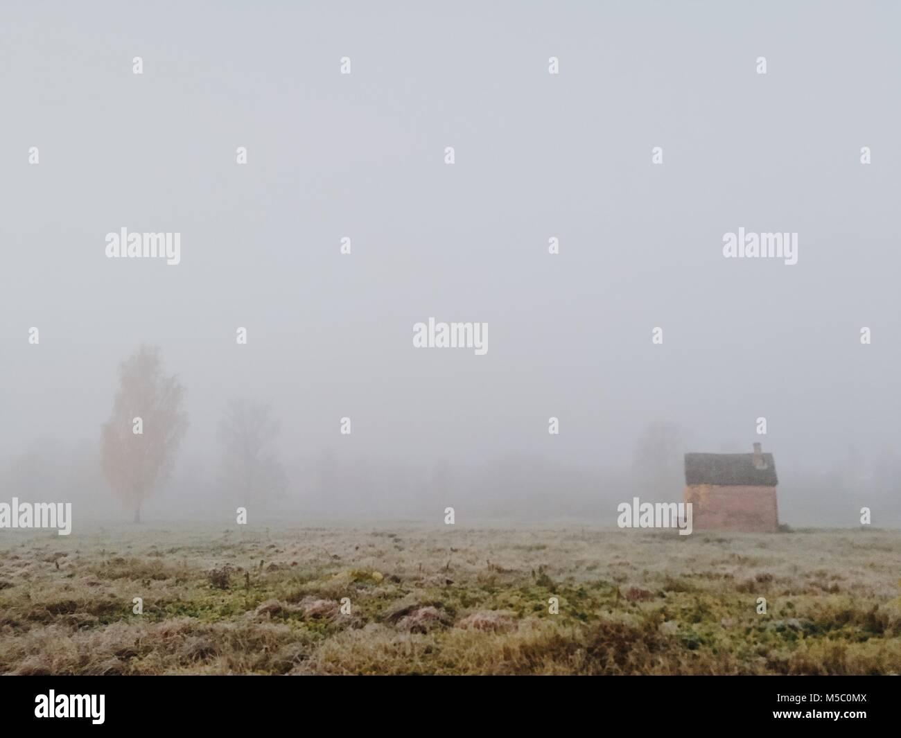 Champ d'herbe. Matin brumeux magnifique scène avec un peu d'abri. Banque D'Images
