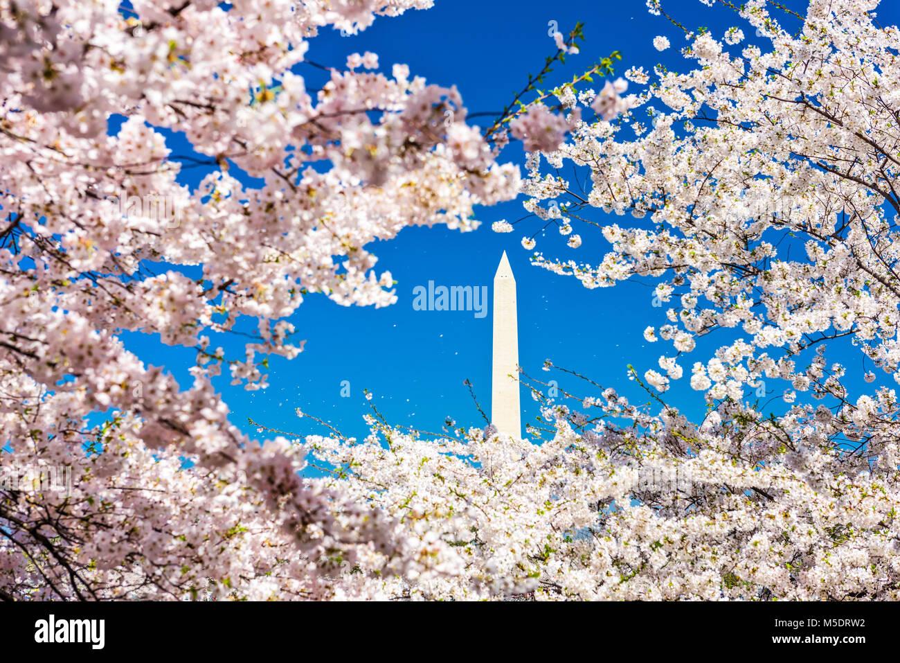 Washington DC, USA dans la saison du printemps. Banque D'Images