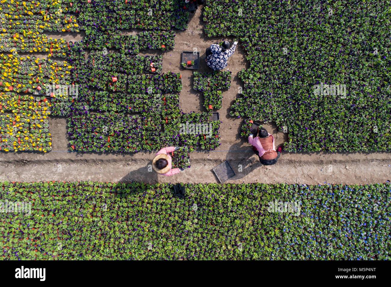 Beijing, Chine, province de Jiangsu. Feb 25, 2018. Horticulteurs prendre soin de fleurs dans un jardin agricole Photo Stock