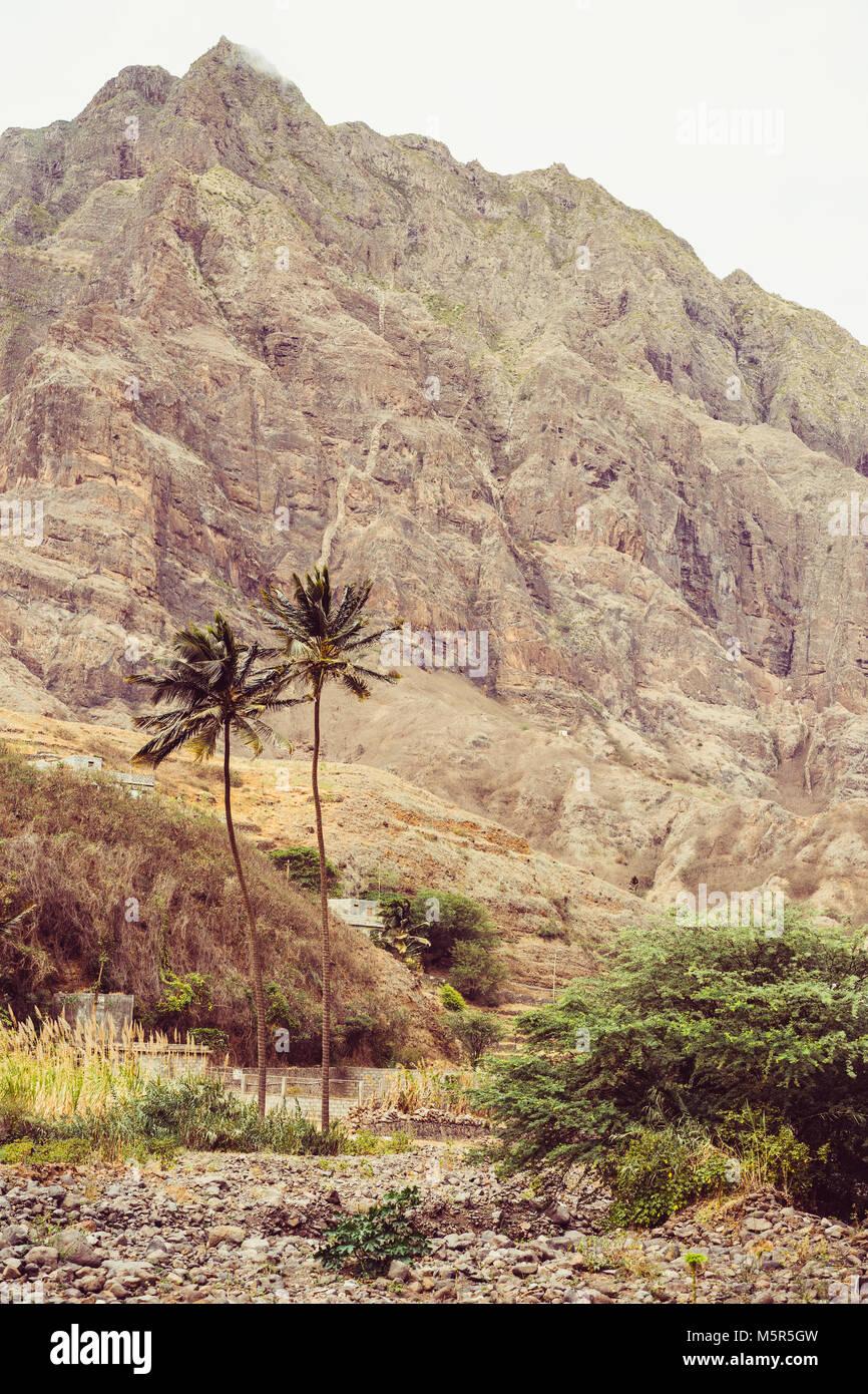 8364c217401 Palmiers dans les zones arides du terrain pierreux. La hausse énorme  montagne aride sur l arrière-plan. L île de Santo Antao