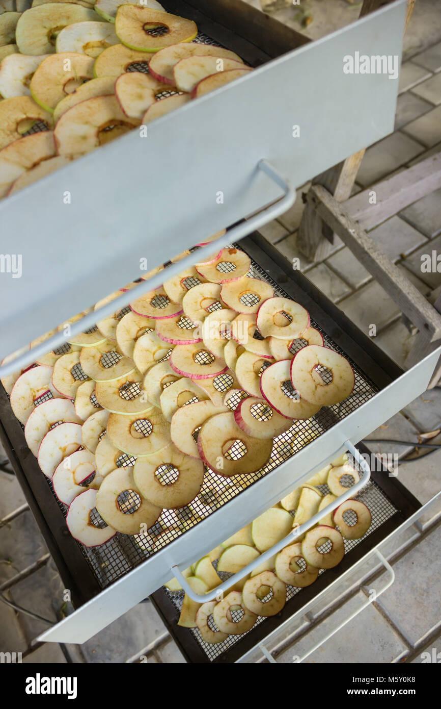 Les pommes sont tranchés et placés dans un sèche-linge électrique Photo Stock