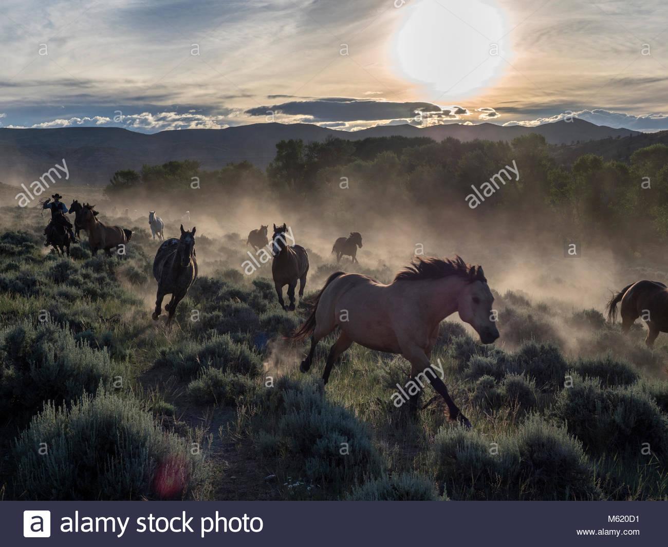Troupeau de chevaux être conduit en début de matinée. Photo Stock