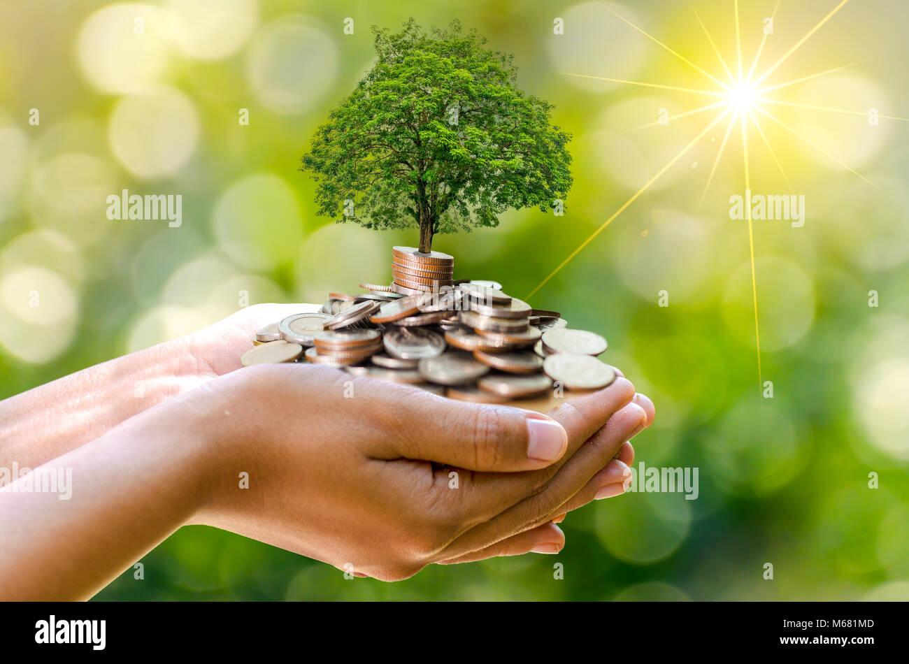 Pièce à main tree l'arbre pousse sur la pile. Économiser de l'argent pour l'avenir. Idées Photo Stock