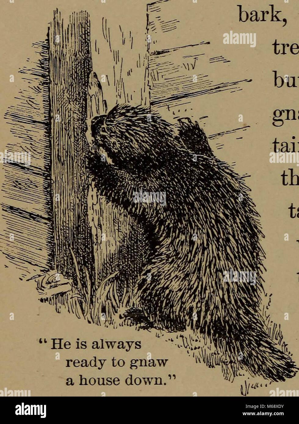 'La vie familière en champ et forêt; les animaux, oiseaux, grenouilles, salamandres et d' (1898) Banque D'Images