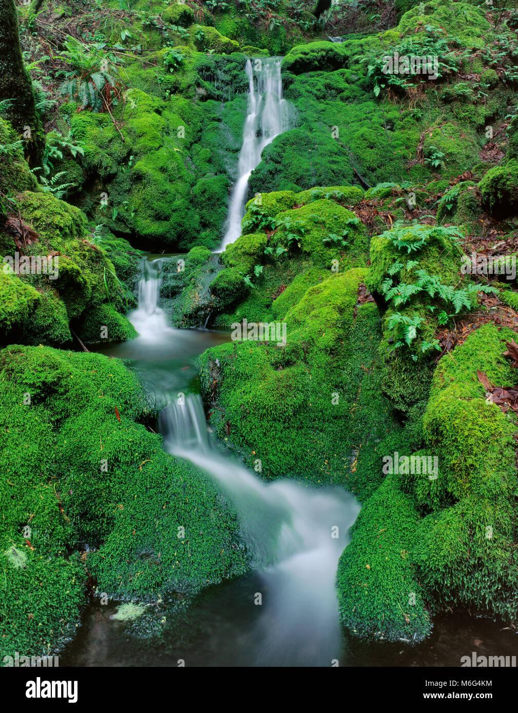 Chutes de mousse, Cataract Canyon, le Mont Tamalpais, comté de Marin, en Californie Photo Stock