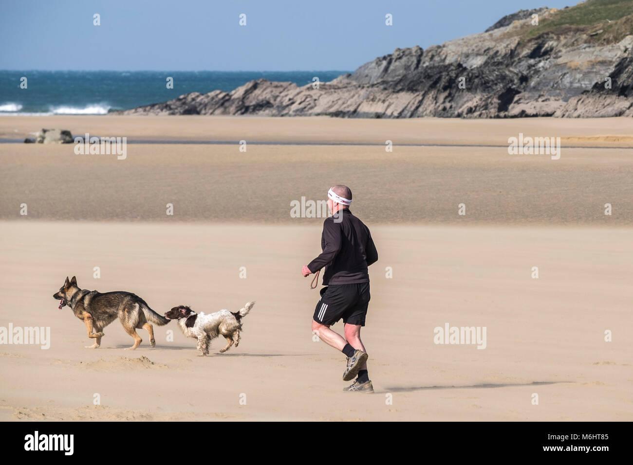 Un homme court avec ses chiens sur la plage de Crantock en Newquay Cornwall. Banque D'Images