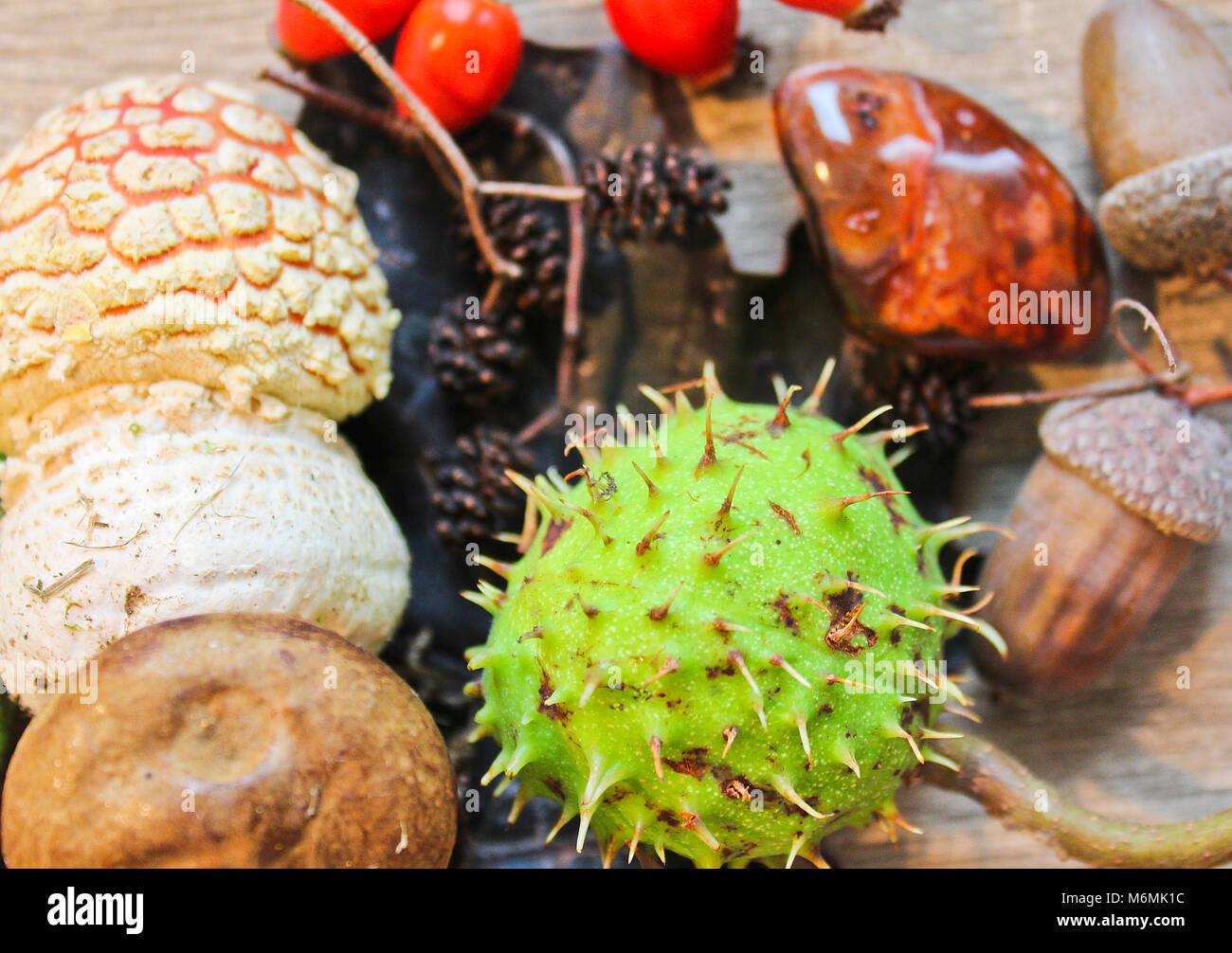Toujours laisser la vie de l'automne, de châtaignier, de champignons, et de la pierre sur fond de bois Banque D'Images