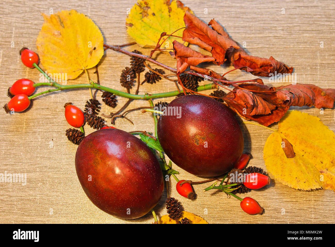 La vie encore l'automne, prune, châton et brier sur fond de bois en pierre Banque D'Images