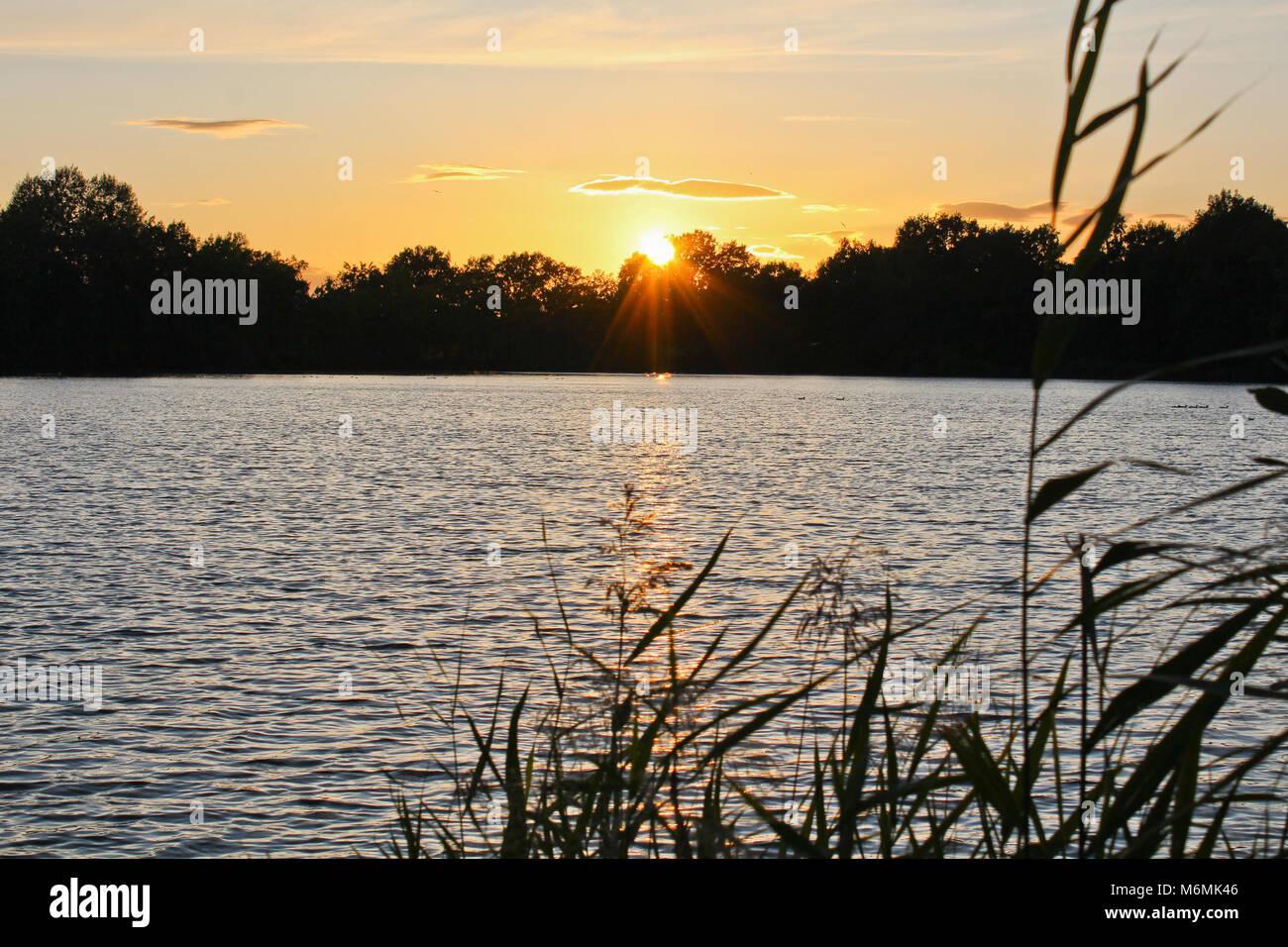 Coucher du soleil sur l'étang avec silhouette d'arbres et de grande herbe devant, concentré de soleil, paysage tchèque Banque D'Images