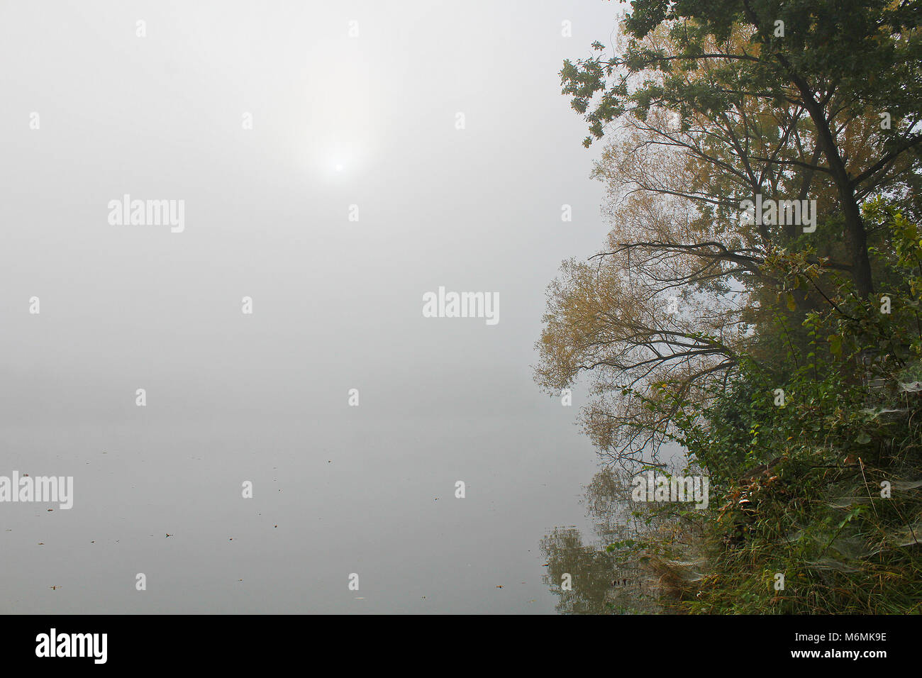 Brouillard brumeux sur étang avec soleil et arbres, paysage tchèque Banque D'Images