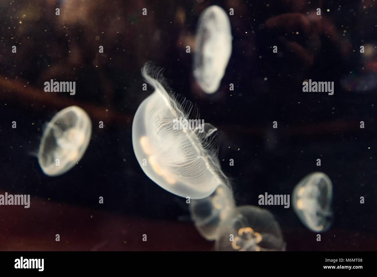 Sea life marine sous-marine blanc - une méduse Photo Stock