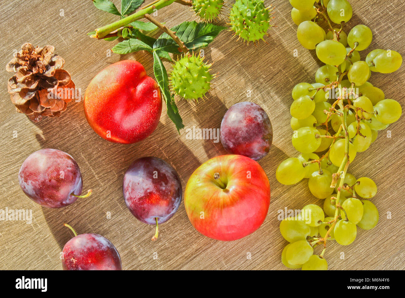 Fruits d'automne, cône, châtaignes, nectarine prune et raisin apple sur fond de bois Banque D'Images