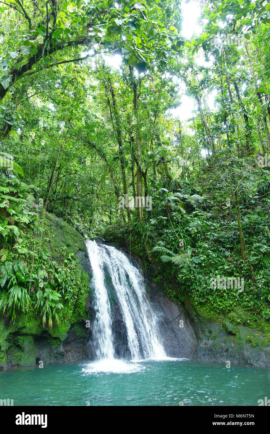 Chute d'écrevisses ou de la Cascade aux Ecrevisses, au Parc National de la Guadeloupe, île des Antilles françaises Antilles. Banque D'Images