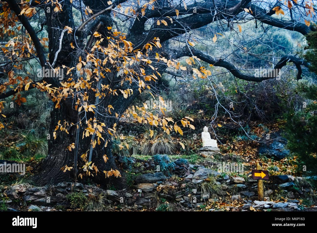 Las Alpujarras, Sierra Nevada, Granada province, Andalusia, Spain: une statue de Bouddha siiting sous un grand Photo Stock