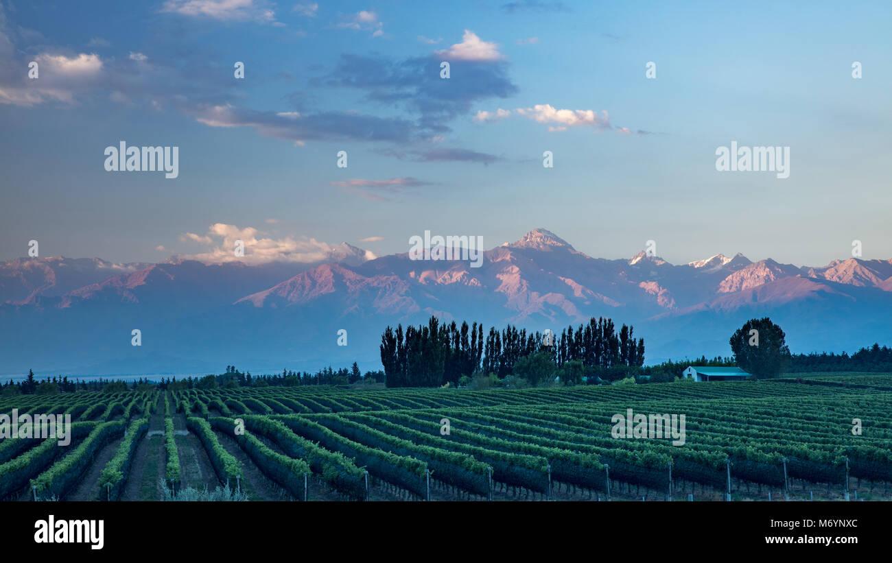 Les Andes des vignobles de la vallée de Uco nr Tupungato, Province de Mendoza, Argentine Photo Stock