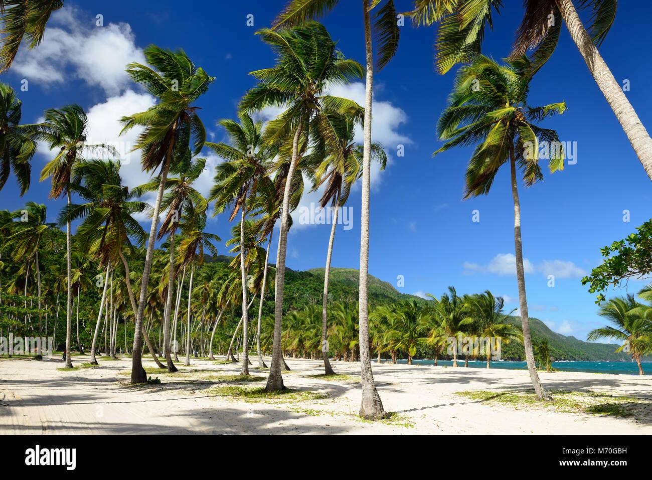 La plage de Rincon sur République Dominicaine. Photo Stock