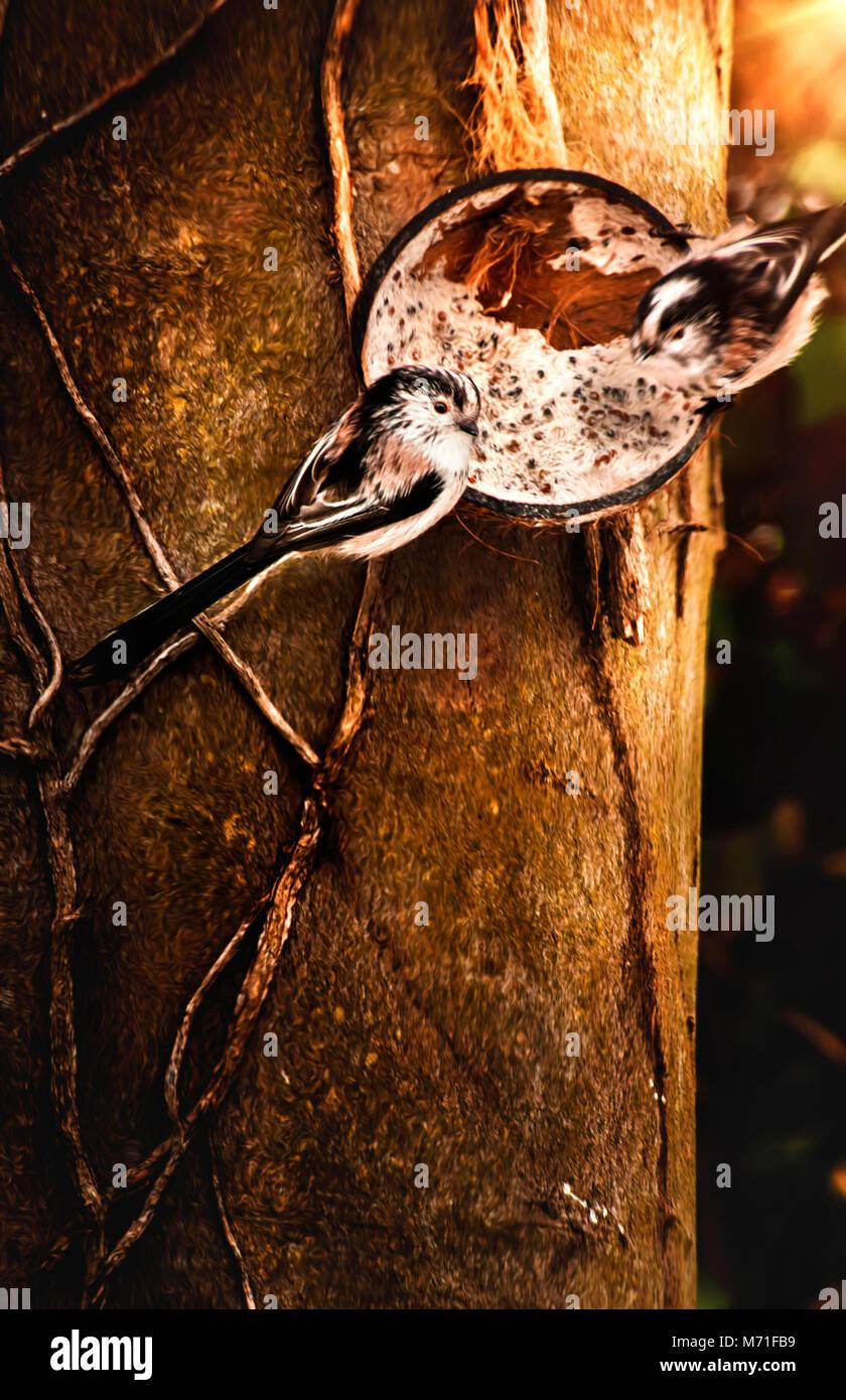 Les oiseaux qui se nourrissent dans le jardin d'hiver Banque D'Images