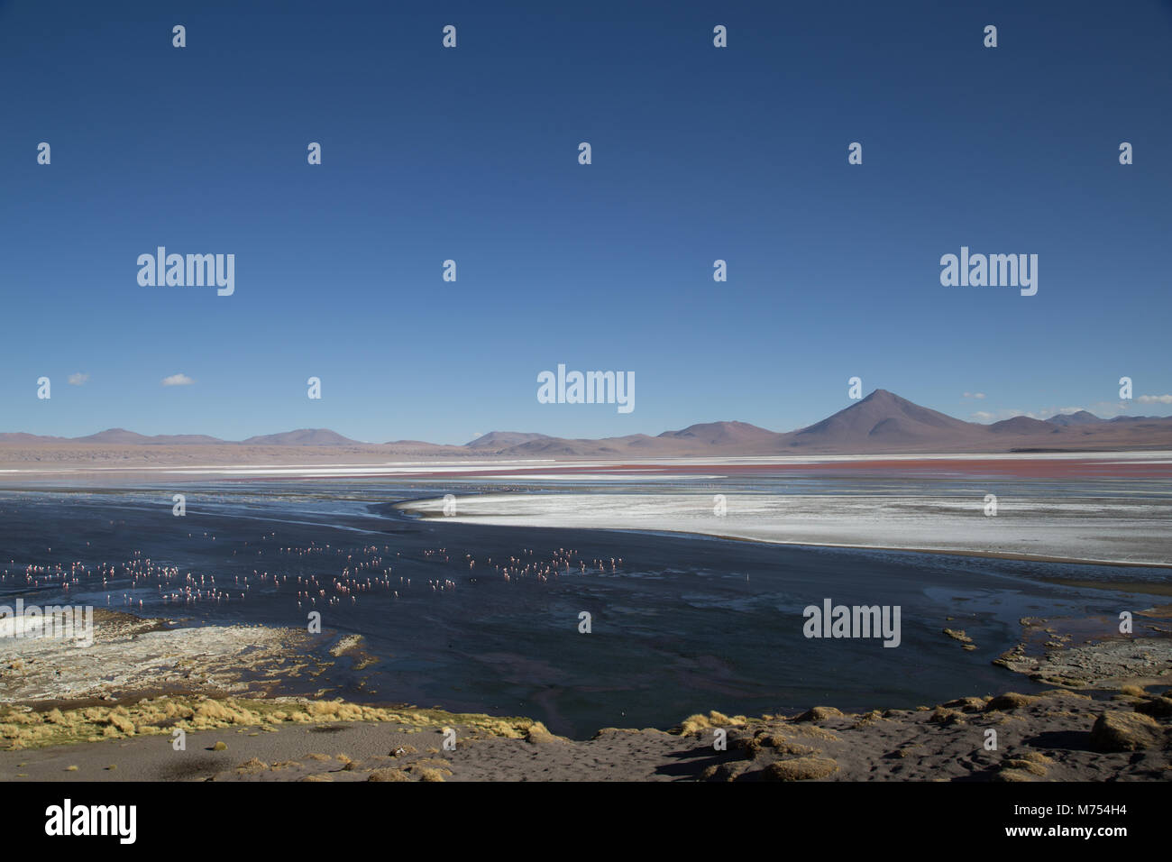 La Laguna Colorada en Bolivie Photo Stock