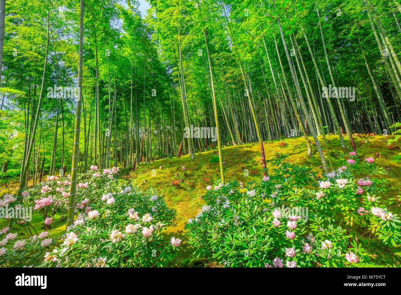 Fleur Jardin Japonais Pres De Foret De Bambou De Tenryu Ji Temple