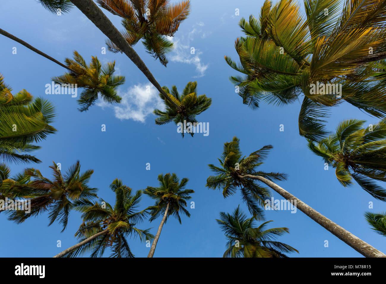 À la recherche jusqu'à de grands palmiers sur la petite plage de Marigot Bay, Sainte-Lucie, îles Photo Stock
