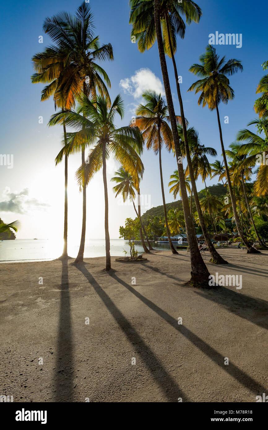 De grands palmiers et de longues ombres sur la petite plage de Marigot Bay, Sainte-Lucie, îles du Vent (Antilles Photo Stock