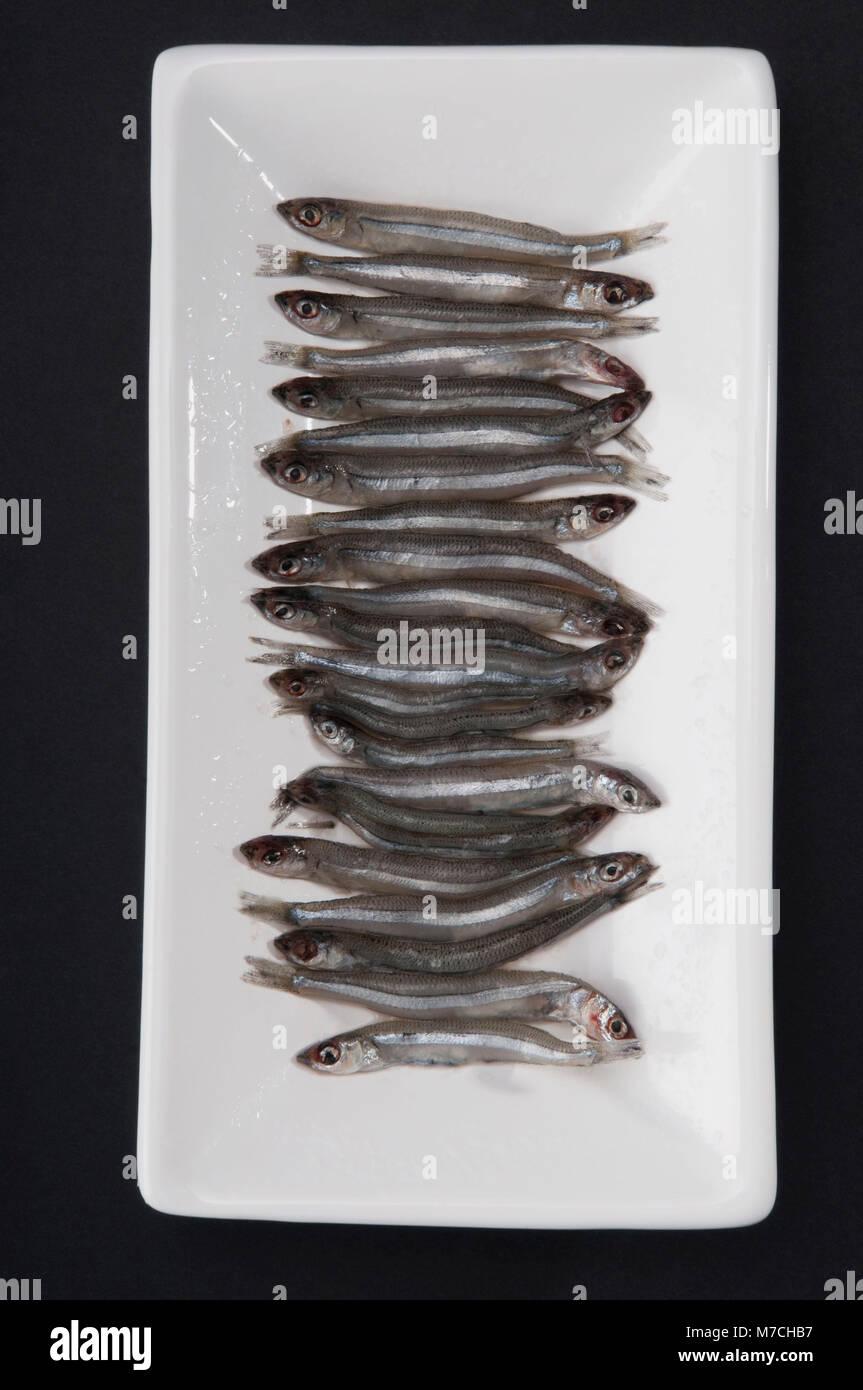 Portrait de sardines sur un plateau Photo Stock