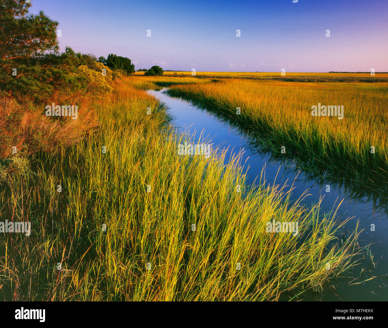 Les zones humides, Doe Hall Plantation, McLellanville, Caroline du Sud Photo Stock