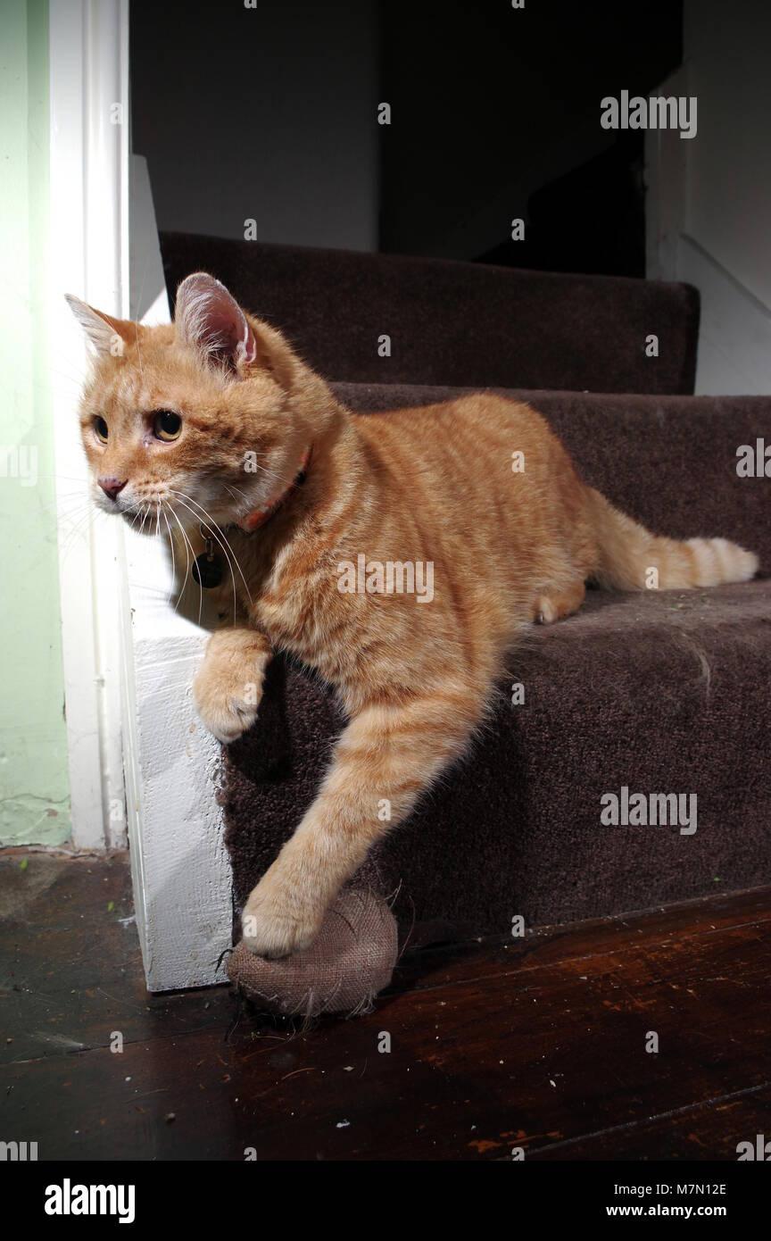 Le gingembre chat jouant dans les escaliers Banque D'Images