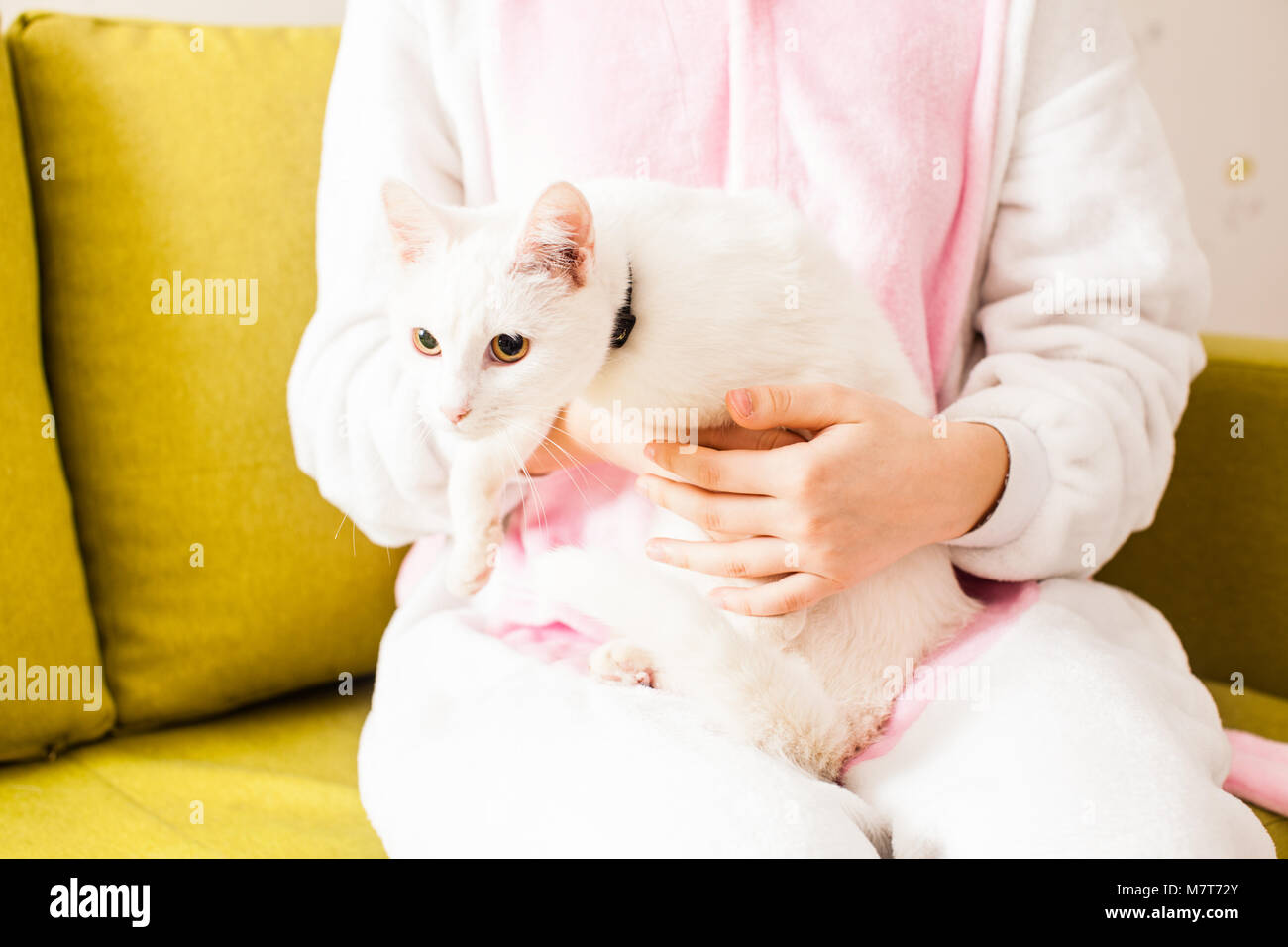 Yeux de chat sauvage Photo Stock