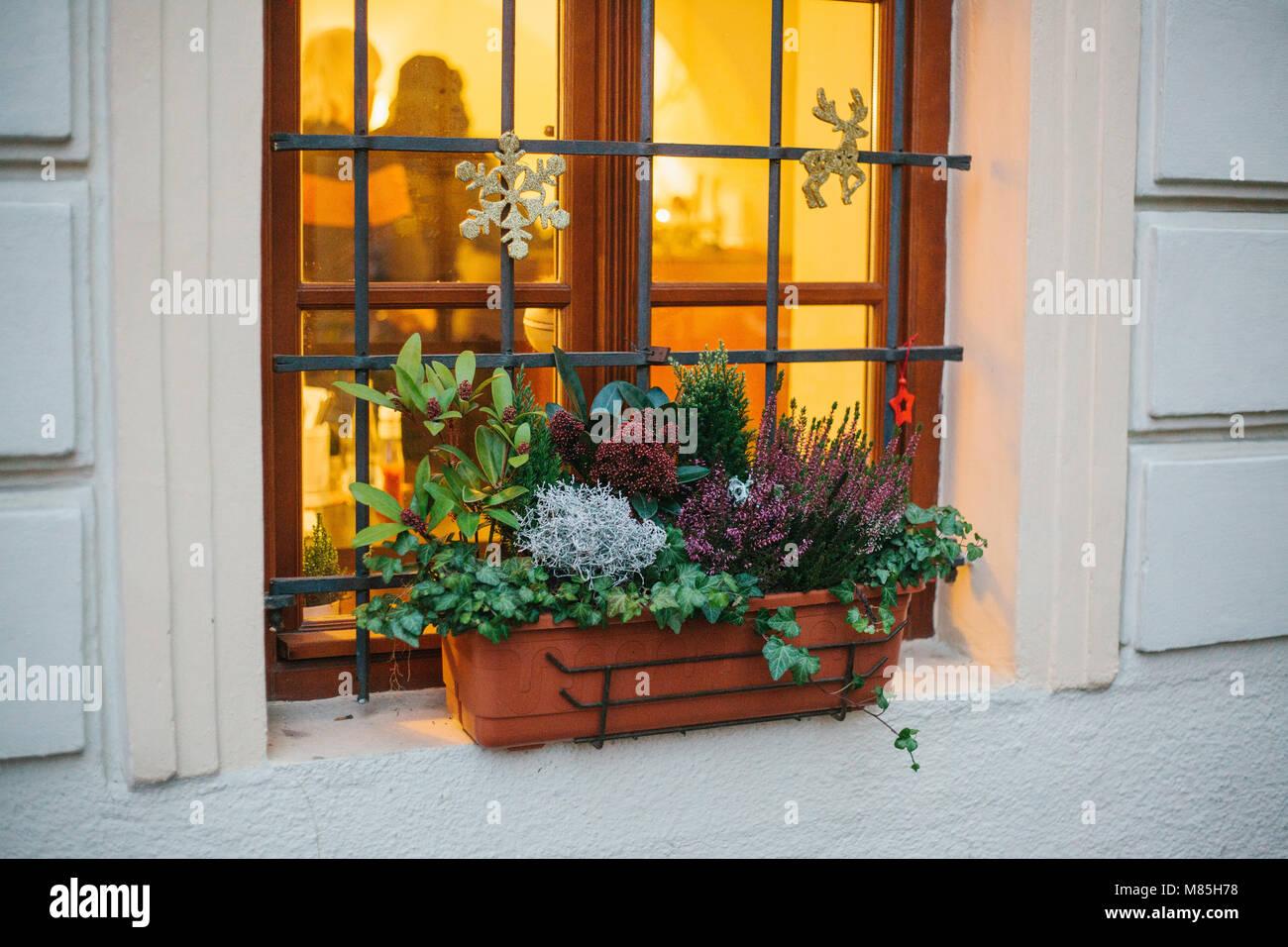 Etoile De Noel Plante Exterieur pot de belles plantes à l'extérieur de la chambre, fenêtre