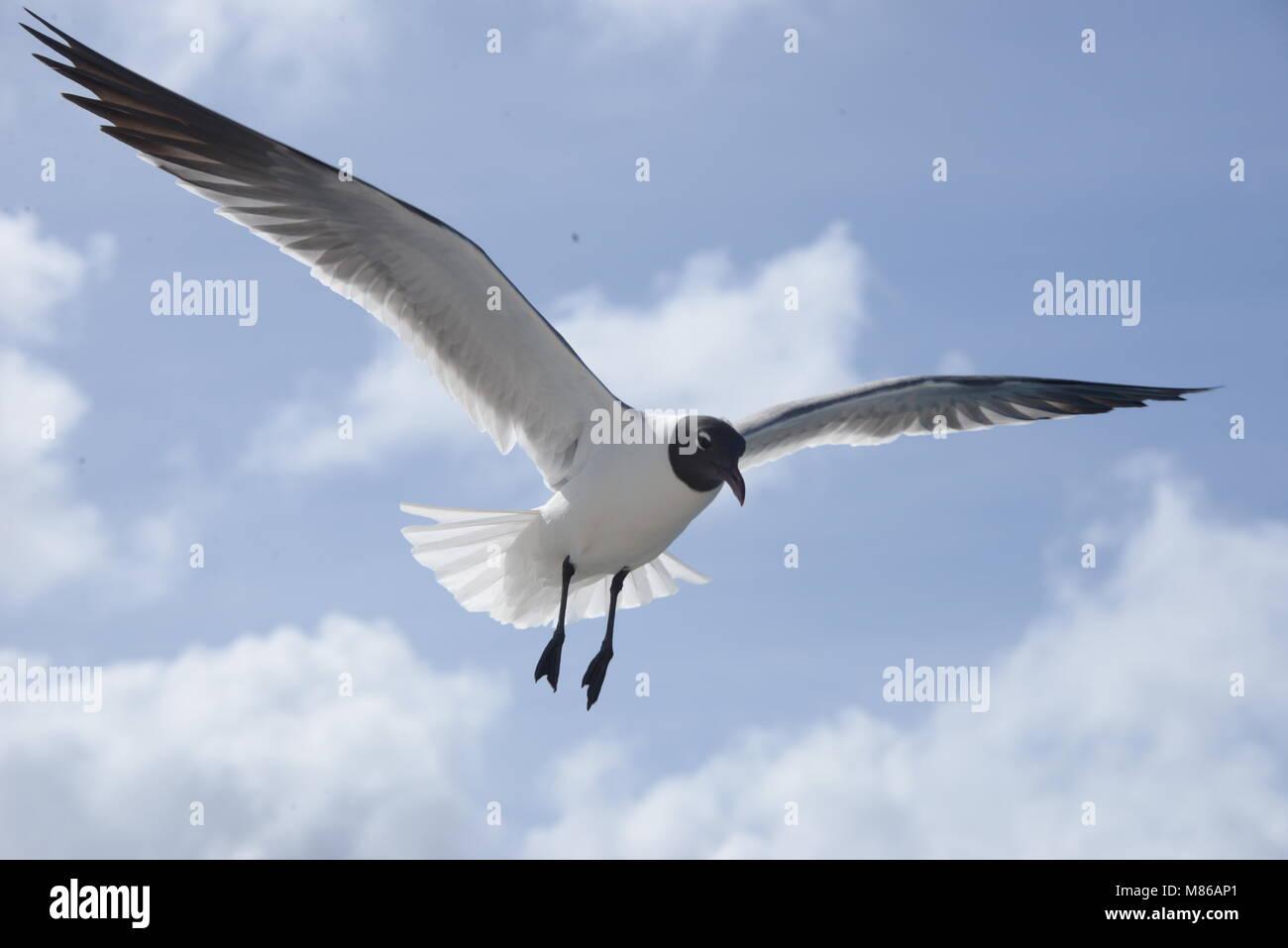 La mer, les oiseaux et les gens dans la grande ville de BVi Banque D'Images
