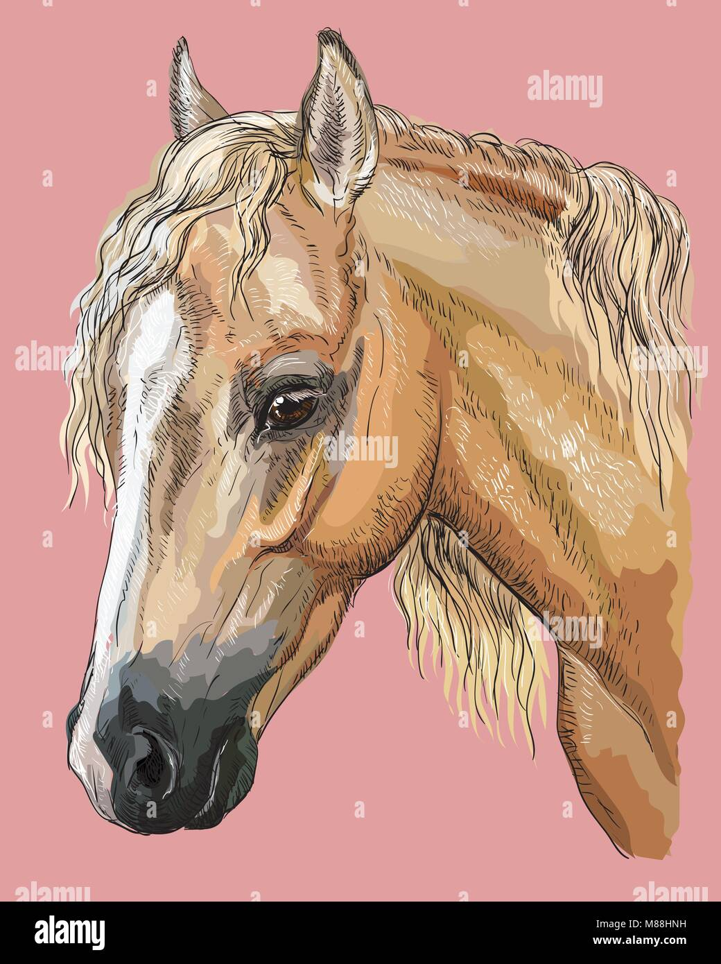 Portrait color de palomino poney gallois t te de cheval - Image tete de cheval ...