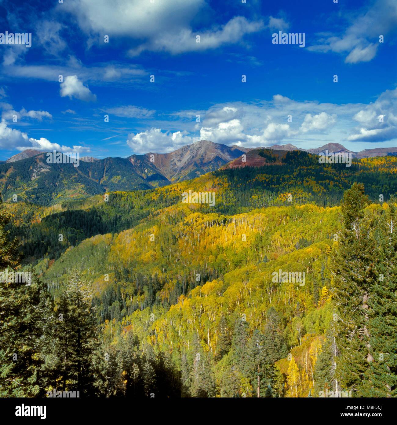 Tremble, Populus tremuloides, Silver Mountain, San Juan National Forest, Colorado Photo Stock