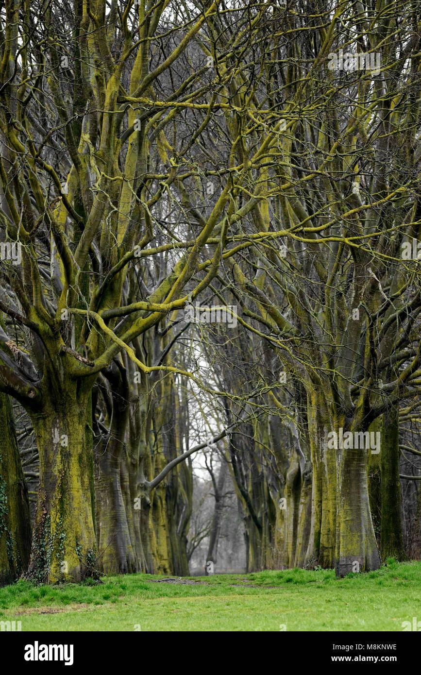 Chemin d'arbres dans les bois Banque D'Images