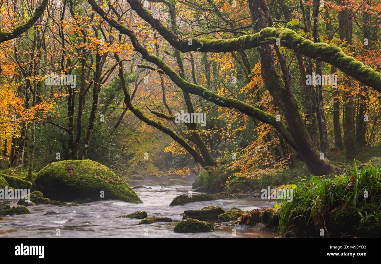 Feuillage d'automne entoure le River Teign près de Fingle Bridge, Dartmoor, dans le Devon, Angleterre. L'automne (novembre) 2017. Banque D'Images